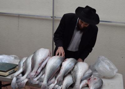 Verificando o Kashrut do Peixe